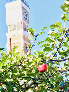 風景,建物,秋,青空,りんご,時計台,札幌,白い恋人パーク,秋空,草木,フォトジェニック,りんごの木