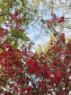 秋の日の写真・画像素材[1564456]