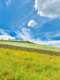 四季彩の丘の写真・画像素材[1690156]