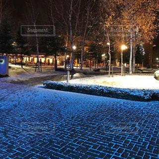 ライトアップされた雪景色の写真・画像素材[1733256]