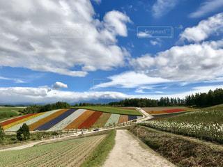 美瑛町色彩の丘の夏の景色の写真・画像素材[2806362]