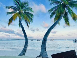 モルディブのビーチの写真・画像素材[1312751]