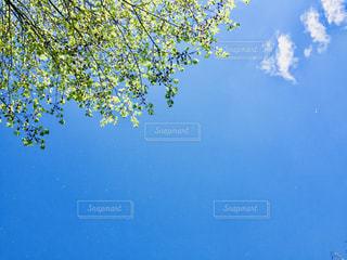 青空と新緑の写真・画像素材[1312920]