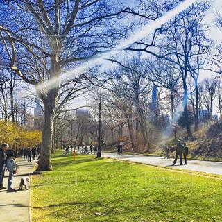 公園を散歩する人々の写真・画像素材[1321708]
