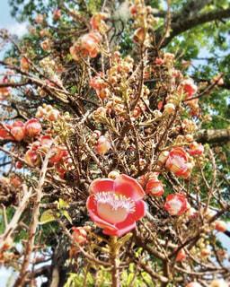 花のアップの写真・画像素材[1375957]