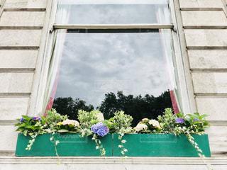 窓の前に咲く紫陽花の写真・画像素材[1382312]