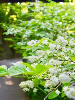 道に沿って咲く花の写真・画像素材[1386957]