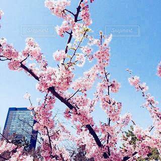 空,建物,花,桜,ビル,屋外,ピンク,青空,満開,pink,さくら
