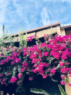 空,花,屋外,ピンク,カラフル,鮮やか,pink,草木,日中