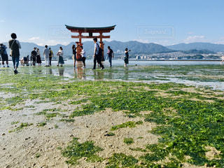 厳島神社の写真・画像素材[1687599]