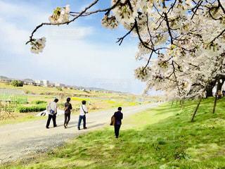 芝生の丘の上を歩く男子グループの写真・画像素材[1693905]