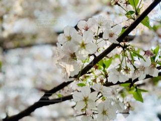 花の写真・画像素材[1982105]