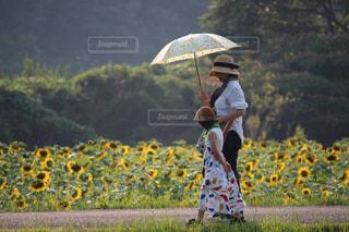 ひまわり畑の2人の写真・画像素材[1397376]
