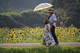 フィールドに黄色の傘を持っている手の写真・画像素材[1442084]