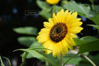 夏の花の写真・画像素材[1367976]