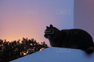 テーブルの上に座って猫の写真・画像素材[1308965]