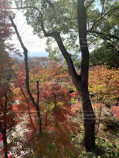 秋,紅葉,木,赤,山,景色,色,太宰府