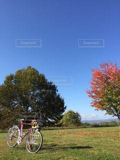 風景,空,紅葉,自転車,屋外,青空,日中,ビンテージバイク,クロモリ自転車