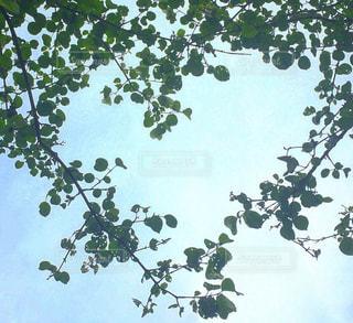 自然,空,屋外,青空,葉,樹木,ハート,草木,マーク