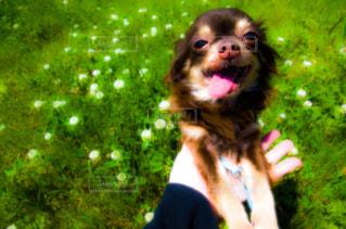 愛犬の写真・画像素材[3002417]