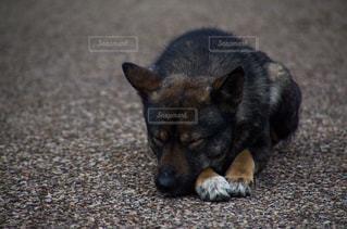 犬の写真・画像素材[3002436]