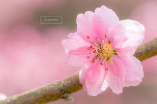 花の写真・画像素材[3002444]