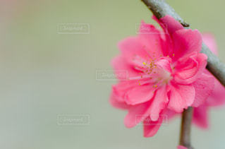 花の写真・画像素材[3007600]