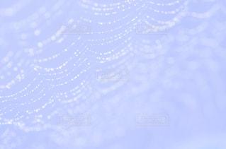 蜘蛛の糸の写真・画像素材[3345175]