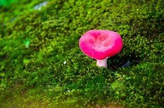 食べ物,自然,秋,屋外,景色,草,野菜,キノコ,食品,地面,食材,フレッシュ,ベジタブル,菌,きのこ,ガーデン,食用キノコ,薬用キノコ