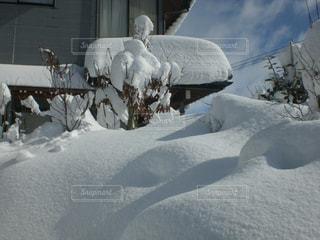 大寒波明けの庭の写真・画像素材[1737980]