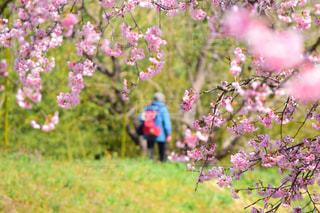 桜,後ろ姿,後姿,おばあちゃん,埼玉県