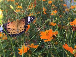 自然,空,公園,秋,花畑,芝生,散歩,昆虫,快晴,蝶,ツーリング,四季,秋空,横浜市,中区,根岸森林公園,友達と一緒