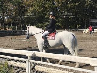 馬,快晴,横浜市,乗馬,サラブレッド,初秋,騎手,中区,根岸森林公園,友達と一緒,紳士の嗜み