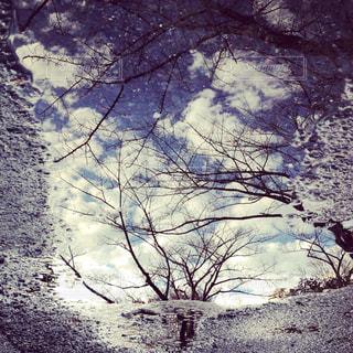 木のクローズアップの写真・画像素材[2221399]