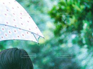 雨,傘,緑,水,水滴,雫,梅雨,玉ボケ,ビニール傘