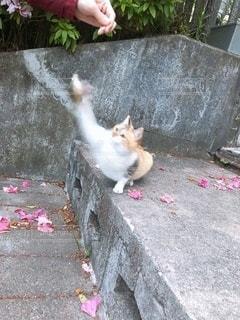 猫と戯れの写真・画像素材[3369764]