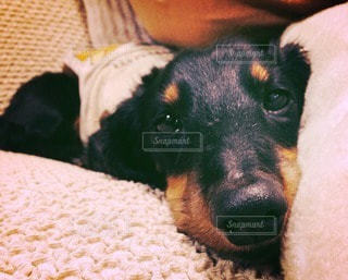 犬の写真・画像素材[40867]