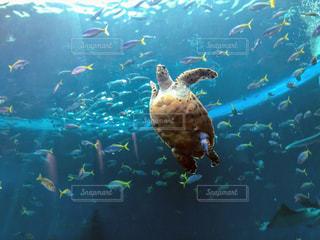 スイミング プールの水中ビューの写真・画像素材[1324675]