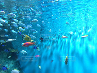 水のカラフルな水泳のグループの写真・画像素材[1317552]
