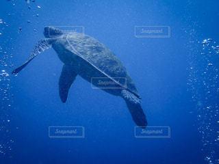 水の下で泳ぐ海亀の写真・画像素材[1317706]