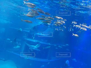 水族館の写真・画像素材[1319182]