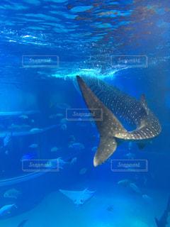 水面下を泳ぐ魚たちの写真・画像素材[1319183]