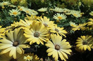 花,春,黄色,イエロー
