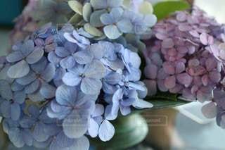 花,景色,紫陽花,梅雨,草木
