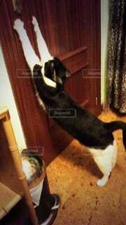 猫,動物,屋内,ペット,人物,ドア,伸び,ネコ