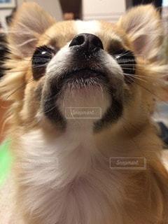 犬の写真・画像素材[13396]