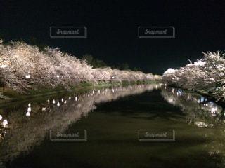 自然,花,春,桜,屋外,花見,夜桜,お花見,弘前公園