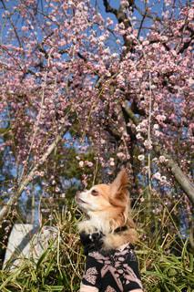 春のピンク色を感じての写真・画像素材[1796738]