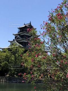 お城と公園の花の写真・画像素材[1395710]