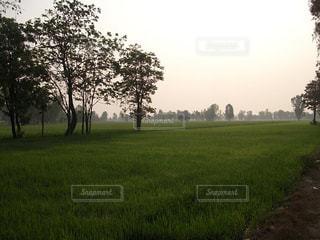 田園の朝の写真・画像素材[1395717]